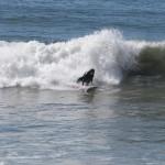 surf@henrys_22 [1600x1200]